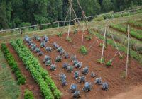 La rotation des cultures est très important pour la santé des légumes
