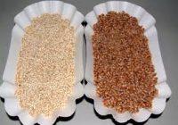 manget le quinoa