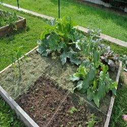 Le potager en carrés est un procédé pratique pour cultiver les légumes.